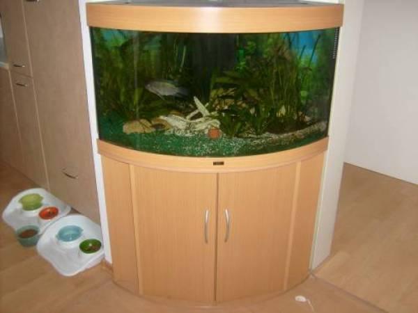 juwel trigon 190 aquarium unterschrank buche co2 anlage. Black Bedroom Furniture Sets. Home Design Ideas