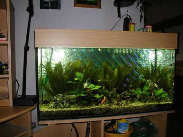 250 liter aquarium. Black Bedroom Furniture Sets. Home Design Ideas