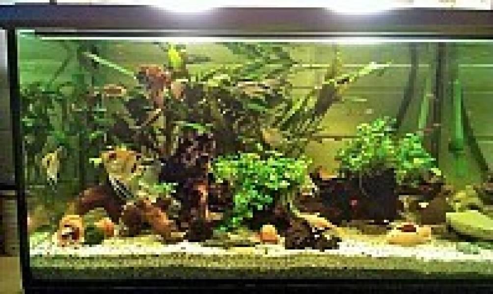 300l aquarium inkl pflanzen und einrichtung l aquarium for Aquarium einrichtung
