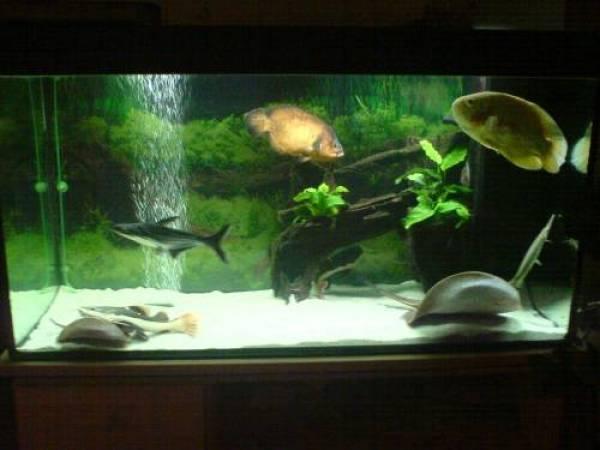 aquarium 120x50x60