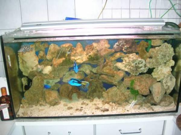 meerwasseraquarium 200l mit einrichtung und fischen. Black Bedroom Furniture Sets. Home Design Ideas